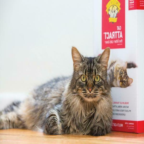 Dr. Cat Attract Clumping Litter, Box