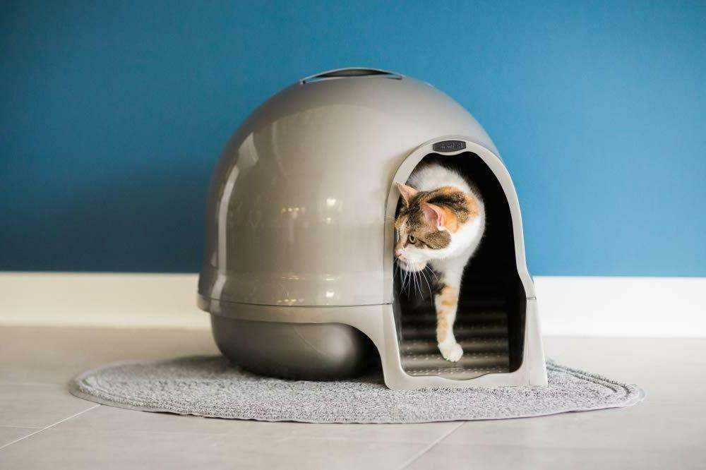Enclosed Litter Box Hidden Large Kitty