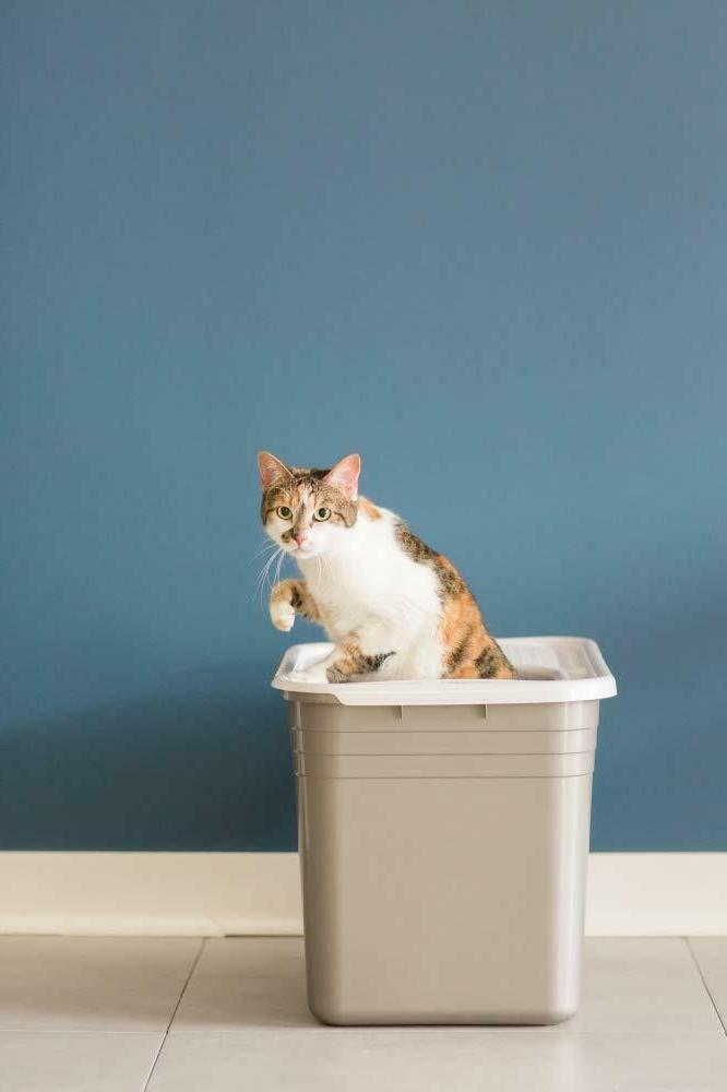Petmate Top Litter Box