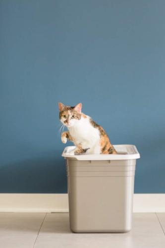 Petmate Top Pan Cat Box Brushed Nickel/Pearl White