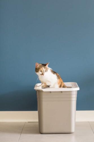 Petmate Top Pan Cat Brushed